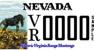 Wild Horse License Plate