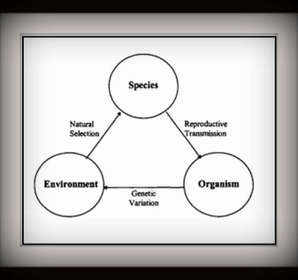 Model of Biological Evolution Source: (Mihaly Csikszentmihalyi and Wolfe 2000: 83)