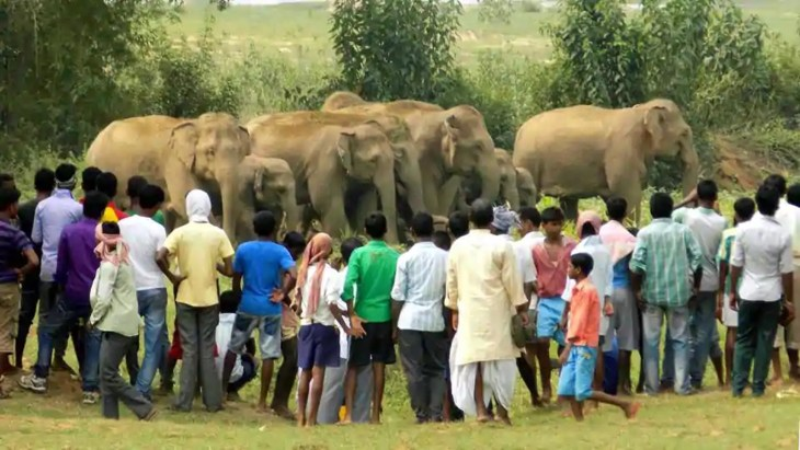 Man-elephant conflicts in Assam has been on the rise