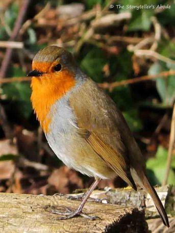 robin 7 small
