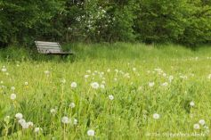 49 bench by dandelion clocks 3