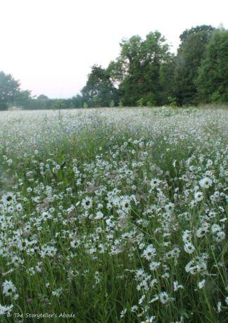 pre-dawn meadow 3
