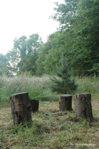 tree stumps in pre-dawn haze