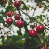 TLT: Fruitful
