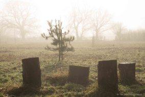 tree-stumps