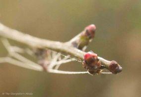 webs-on-twig