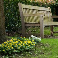 Wordless Wednesday: Sit and Watch the Flowers Bloom