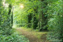 Golden Light on Path 2