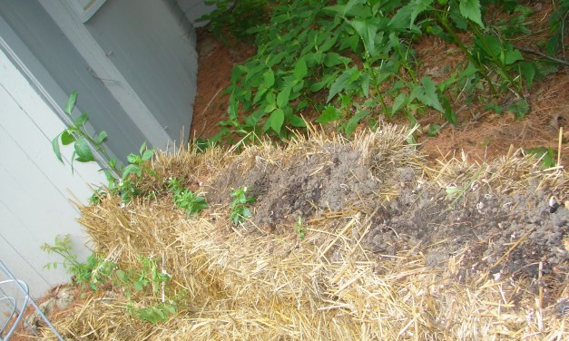 Faculty Voices with Jackie Briggs Martin: William Stafford Sitting in My Straw Bale Garden