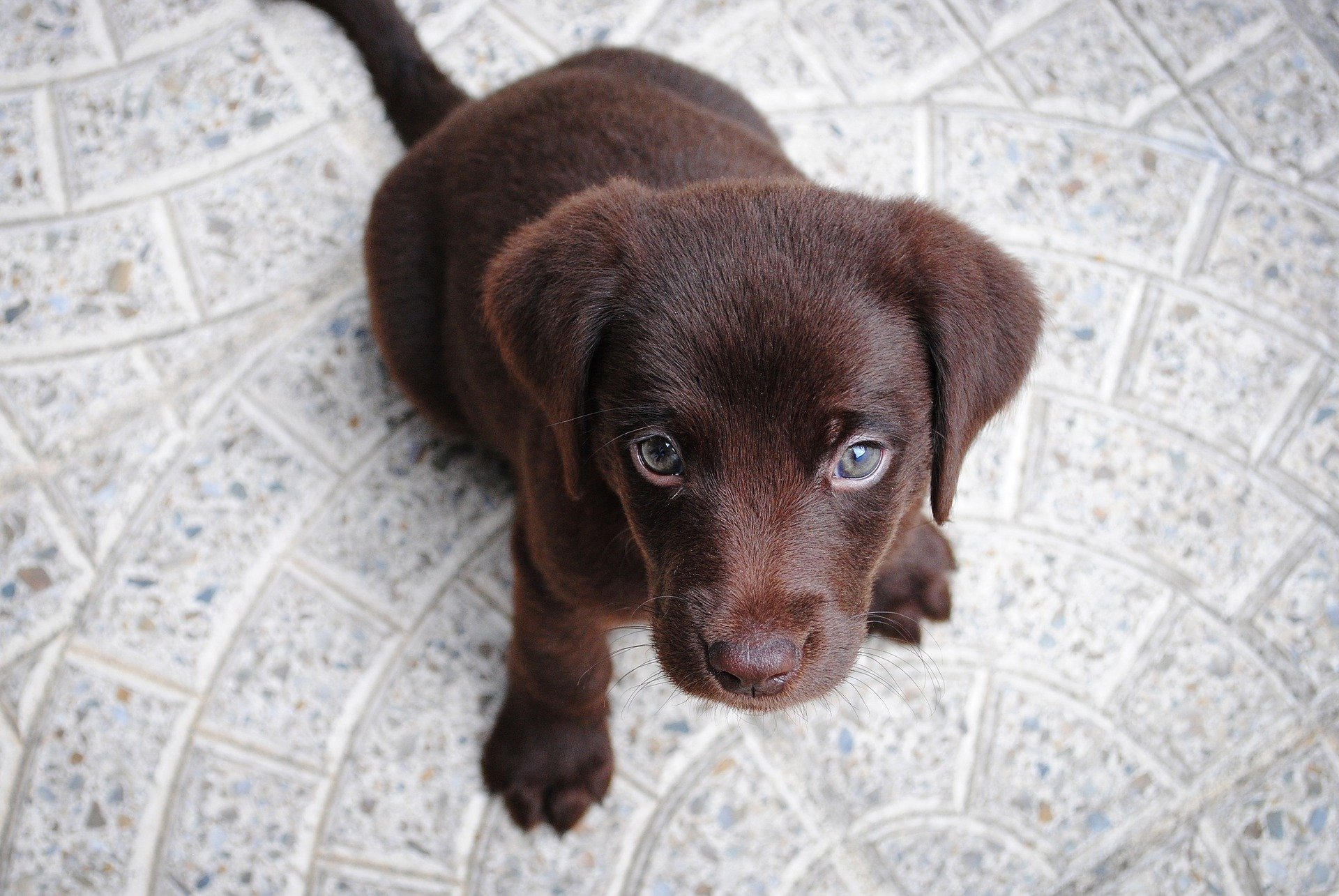 how to help your new dog settle in