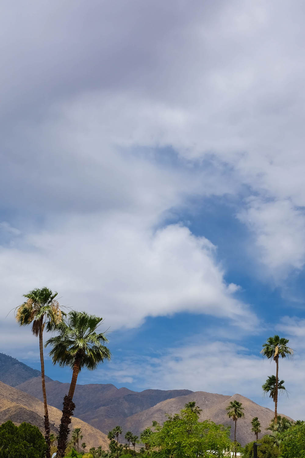 palm springs travel guide - the stripe