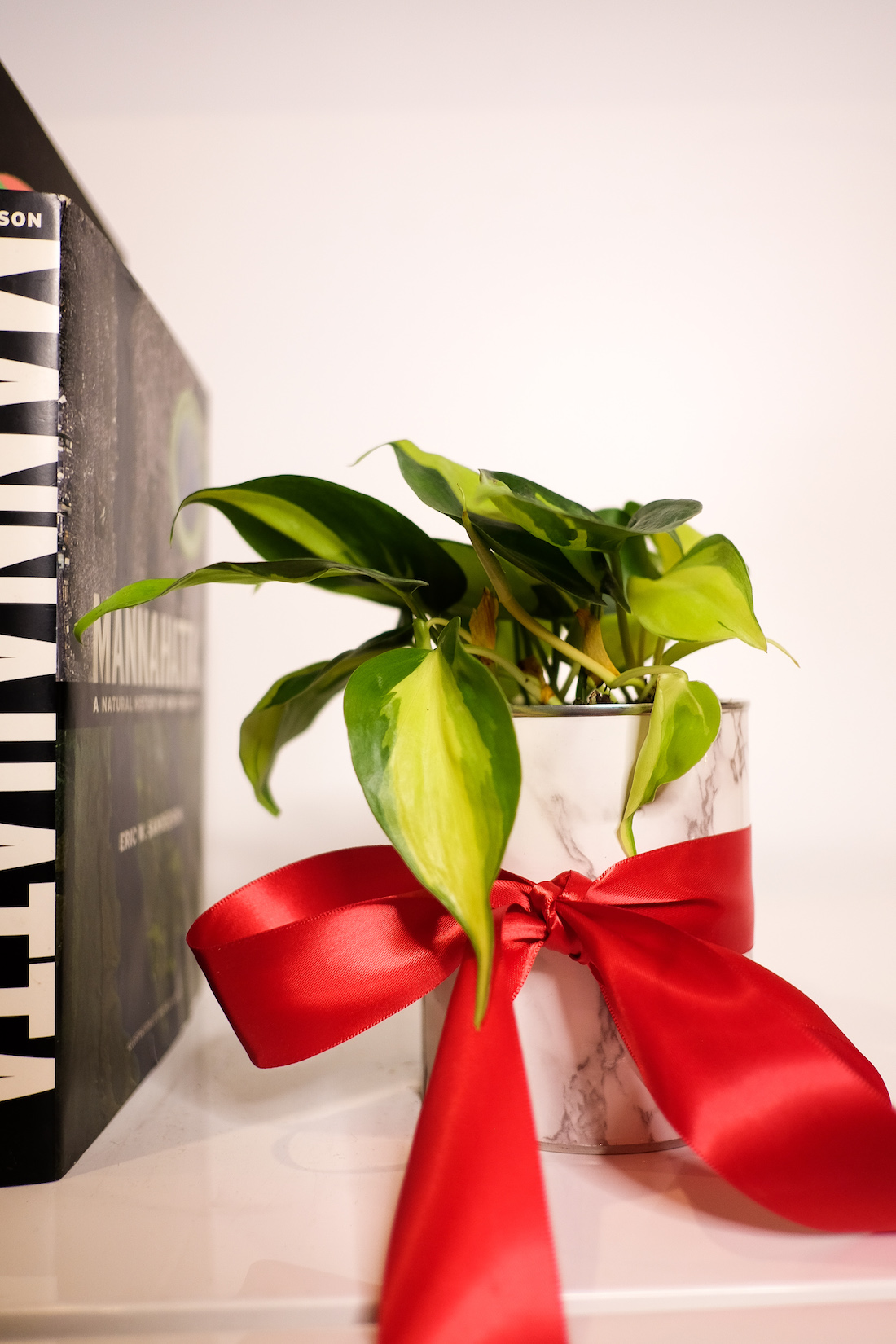 How to Make Planter Gifts For Christmas