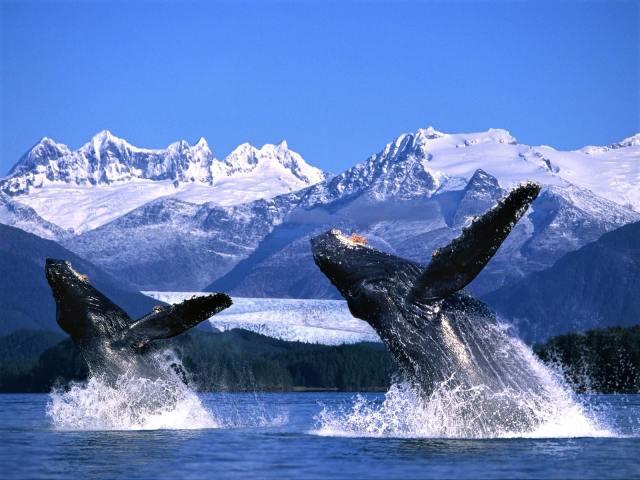 whale watching at Glacier Bay National Park, Alaska