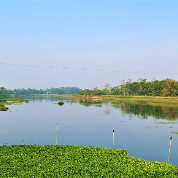 Adorned With Mallow- The Majuli Island In Assam