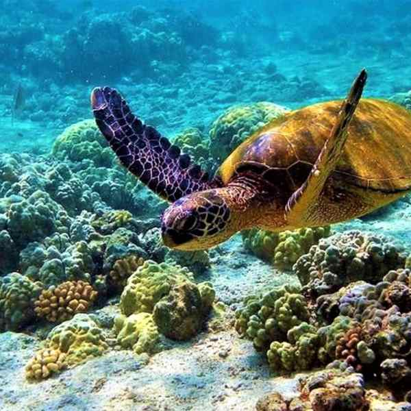 6 Indian Marine National Parks You Simply Must Explore