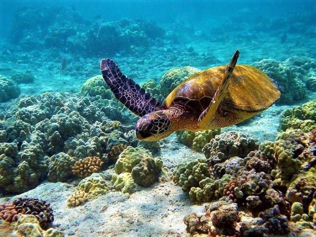 Gulf Of Mannar Marina National Park