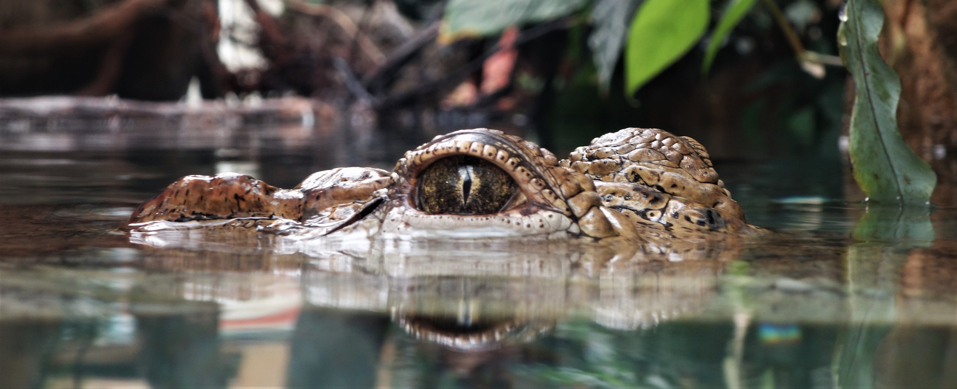Fun Facts About Crocodiles For Kids The Stuff Of Success