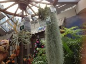 Air plants galore! Humidity friendly.