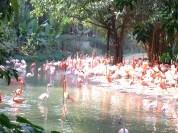 Hello noisy flamingos!