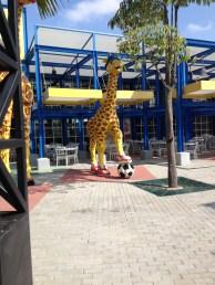 Soccer playing giraffes.