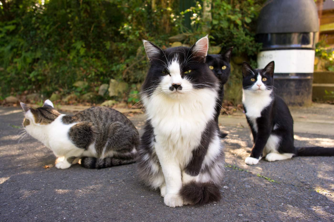 Tashirojima, l'isola giapponese con più gatti che esseri umani