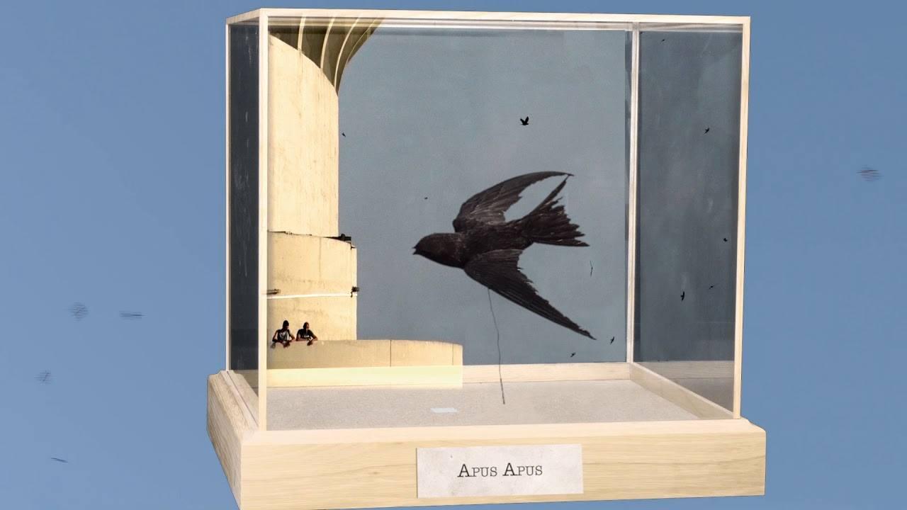 Diorama è il film che racconta il bird watching di città che non avete mai visto