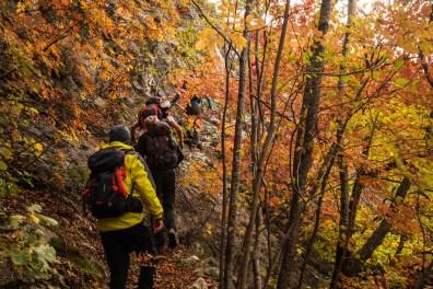 Camminando nei boschi dell_Appennino umbro-marchigiano (Fondarca)