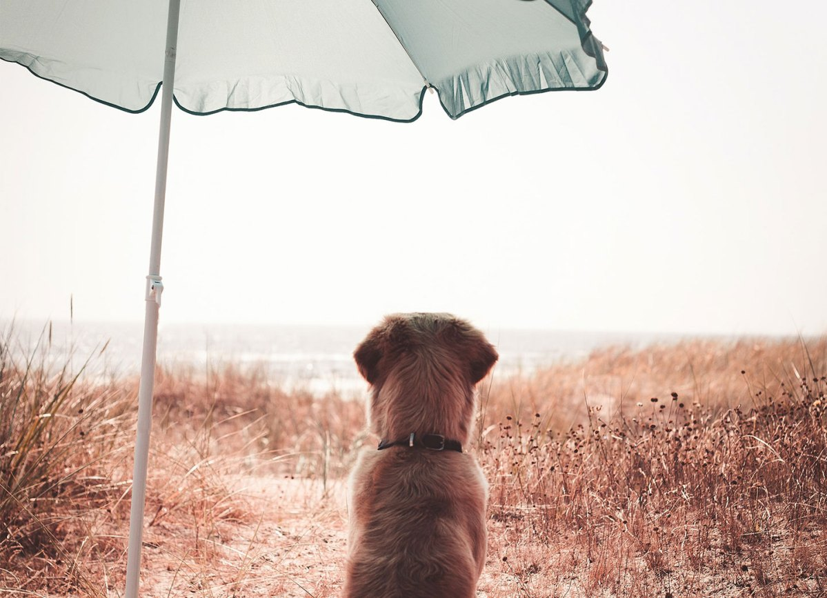 https://i1.wp.com/thesubmarine.it/wp-content/uploads/2021/07/cover-doggo.jpg?fit=1200%2C867&ssl=1