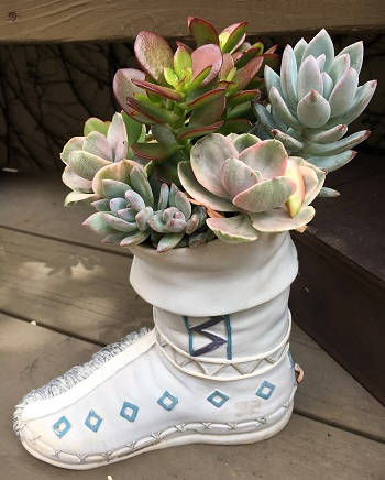 ceramic boot filled with colorful mixed succulents