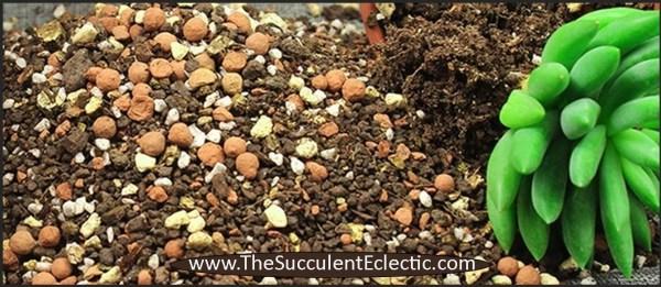 succulent soil ensures haworthia success
