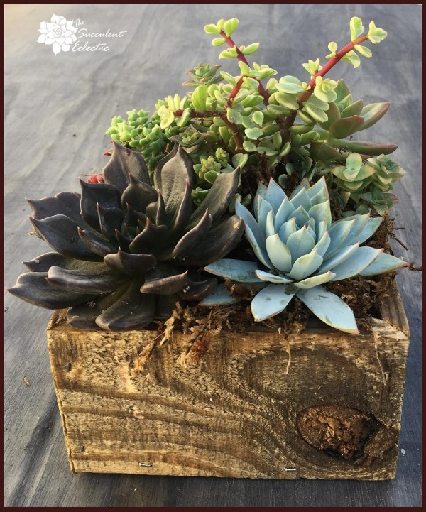 succulent box of reclaimed wood - order yours