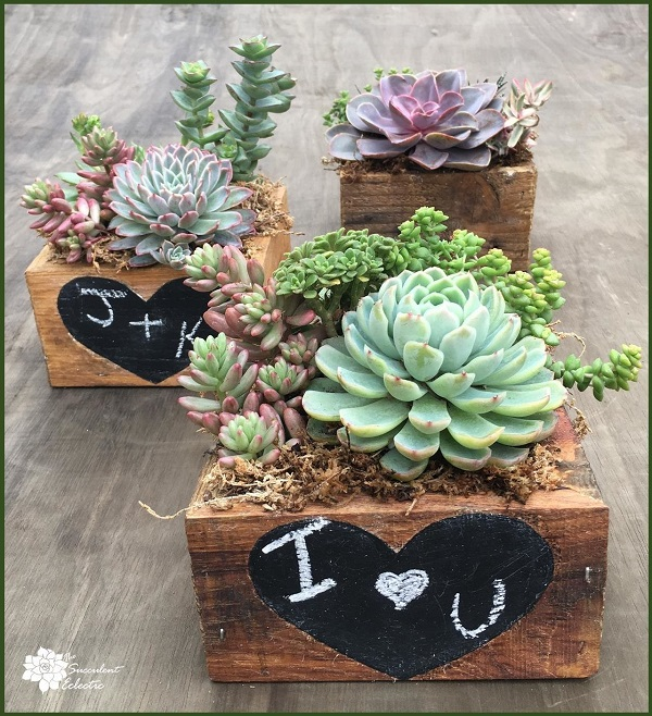 reclaimed wood planter with chalkboard heart filled with succulents for sale