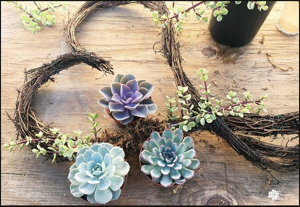 plan the arrangment of succulents for your wreath