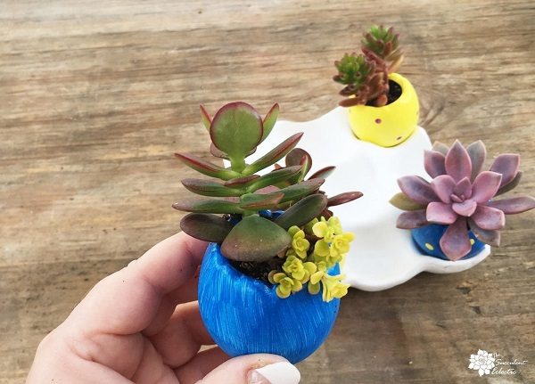 plant the succulent Easter egg planters