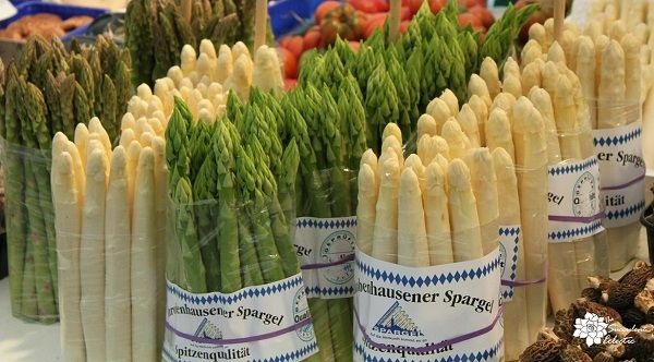 etiolated white asparagus grown without light