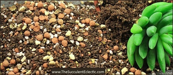 plant succulents in gritty fast draining succulent soil