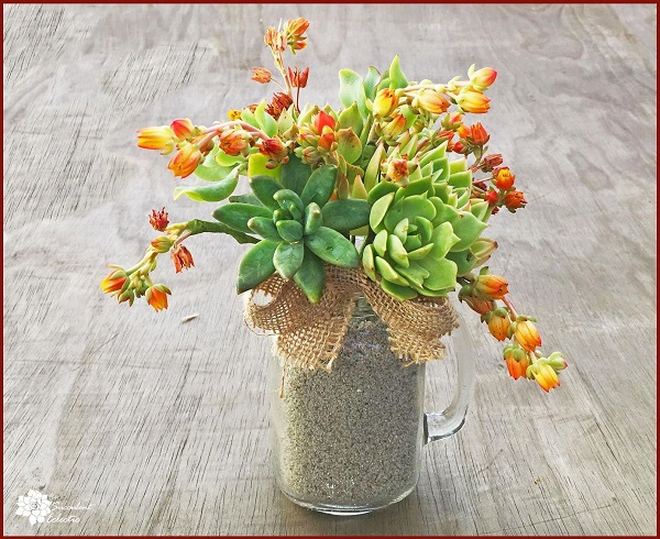 echeveria and blooms in succulent bouquet