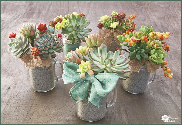 succulent bouquets in mason jar mugs