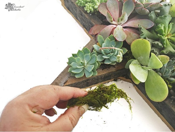 roll moss to add it to Star Shaped Planter