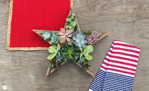 4th of July DIY Star Succulent Planter