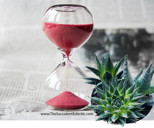 hour glass and succulents