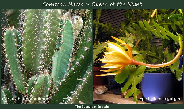 Scientific Names of Plants & Why They Matter | The Succulent Eclectic