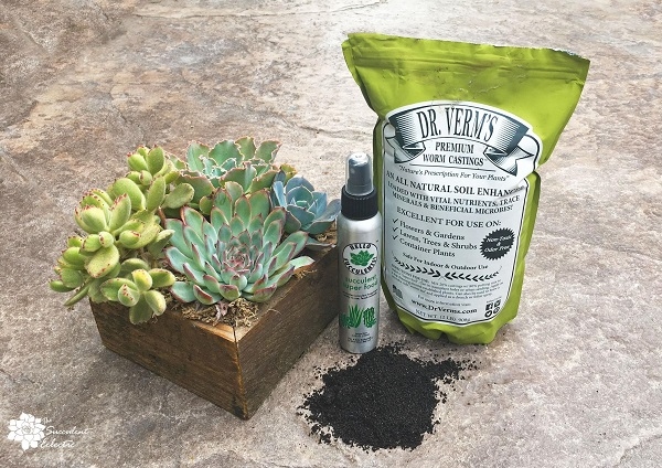 succulents with worm castings products for fertilizing and pest repellants