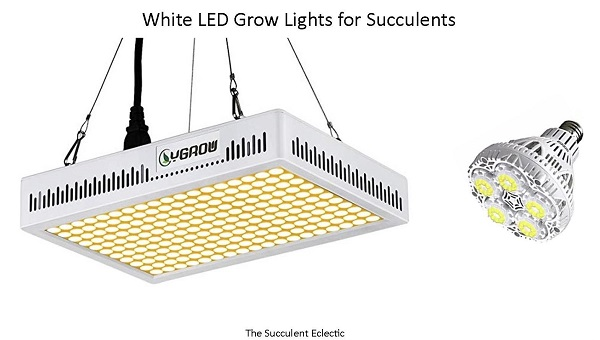 comparison of white led grow lights for succulents