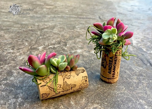 succulent cork magnets featuring anacampseros sunrise
