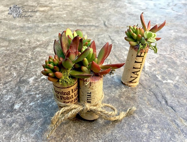 succulent magnet cork planters