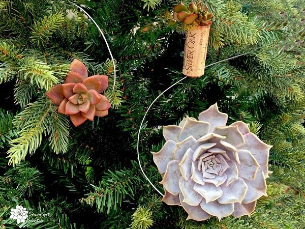 DIY Living succulent Christmas ornaments echeveria and graptoveria