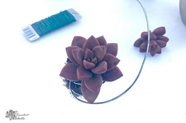 graptoveria as a succulent Christmas ornament