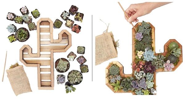 succulent planter kit comes complete with cactus shaped wooden planter and all succulents to fill it