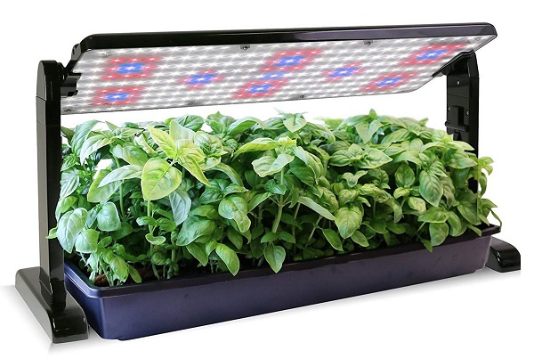indoor grow light is a great gift for succulent lovers